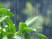 雨をスムーズに流し、ダメージを減らす